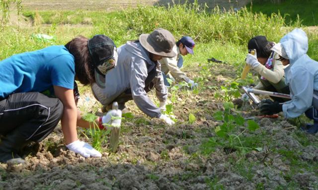 写真:アグリ農作業